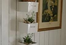 Indoor garden - Nina