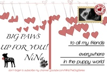 For all my followers! :) / #thanks to my #followers & #following ! NiNa #TheDogSeries
