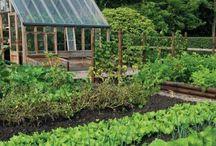Barrett Organic Garden