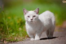 Кошки - это кошки