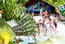 Jamaica Excursion Tours / Jamaica Tours and Things to do in #MontegoBay, #Negril, #OchoRios Port Antonio and Kingston @ http://www.paradisepalmsjamaica.com / by Paradise Palms Jamaica