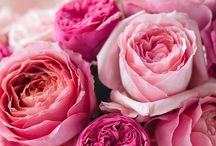 Rose - Rózsa