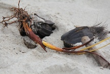 Photo art from travelling in Borneo 2012 / Pictures taken from objects found on beach, in the Tip of Borneo...