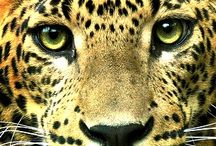 Leopardík