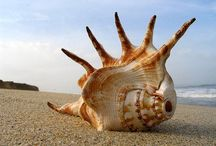 the sea / seashell,sand,waves,pictures
