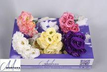 Anthea flowers