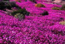 Flower Power,,,,