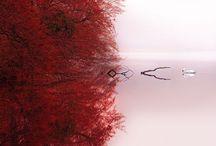 Tranquility,Peace&Harmony