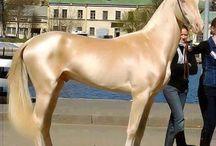 Lori made me love horses