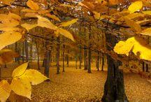 Smashing Autumn September Week 2