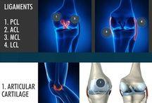 ανατομία γόνατος