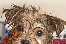 Chelsea pup