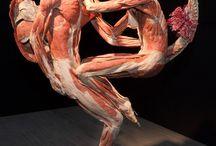 Body Worlds Gunther Von Hagens / by fugwich