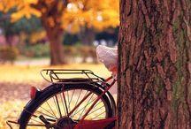 Bisiklet ve Doğanın muhteşem kombinasyonu