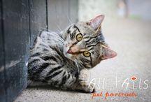 Kitty Kitty / Cats portraits... http://www.talltails.co.nz/