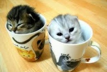 Too funny/cute!