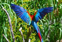 birds and feathers / image collection of birds from the most exciting colors