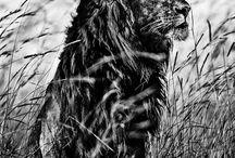 El álbum familiar de la salvaje África por Laurent Baheux