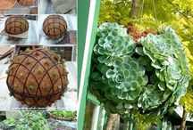 Grădină plante suculente