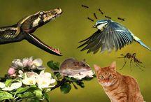 Cara Melindungi Burung dari Bahaya Tikus, Ular, Semut, Nyamuk, dan Kucing