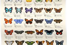 Butterflies and Moths for Kids / Cool ways to learn about insects and explore the outdoors