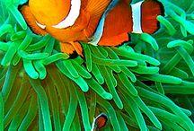 FISH PHOTOGRAPHY