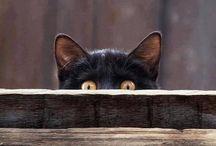 Cats! / Cats