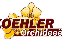 G-Fresh grower Koehler Orchideeën / An Aqua Orchid is grown in a pot, just like ordinary orchids. Due to a special treatment during its cultivation, the plant can be replaced from soil to water. This treatment also ensures that the plant can be kept in ordinary tap water throughout the flowering period.