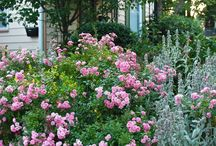 Beautiful Home Sweet Home / House, Cottages, Fences, Gardens, Plants, Flowers,Embroidery, Flowers, Birds, Dogs, Cats