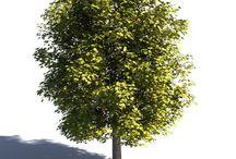 건축 나무 하이앵글