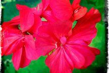 TOKIDOKI - Flowers
