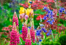 Flowers / Pretty flowers.
