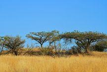 South Africa: A Bushveld Love Affair