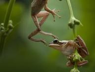 Must love frogs