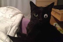 Cats who realize they've made a huge mistake