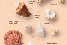 ❤️ Shells and Beach