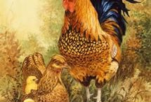 galli rooster painting