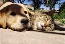Gatitos y Perritos...