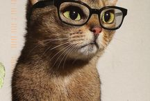 typisch Katzen ❤