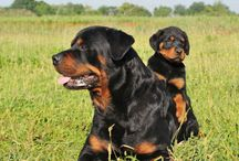 Dog Breeds to Own
