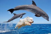 funny stuff/ cute animals