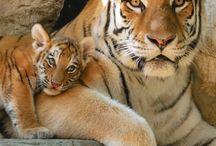 Wild cats.Meow...