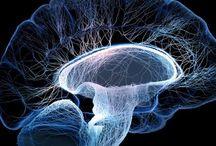 Brain,Mind