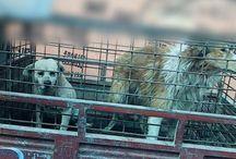 Animal Welfare & Rescue