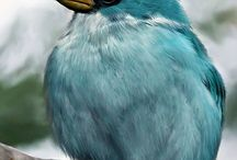 All God's Critters - Birds-blue/green/purple / by Kay Hough