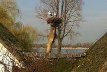 Ooievaars in Zuilichem. / Tot tranen geroerd door de schoonheid van Zuilichem. Op basis van deze foto is internearketingbureau http:/www.marketingvogels.nl geboren