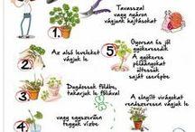 kert,virág,természet