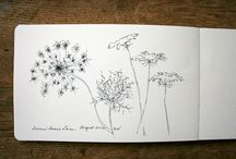 Queen Ann's Lace / by Amanda Weiland