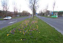 lente spring primavera