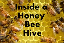 BEE'S & HONEY / Attracting bees to your garden, raising bees, and all things to do with honey!